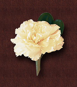 Carnation Boutonniere 5.00