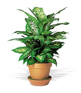Green Plant 30.00,50.00