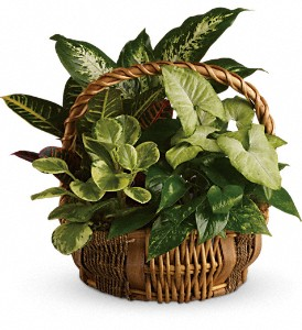 Plants...Basket garden-40.00,50.00,60.00